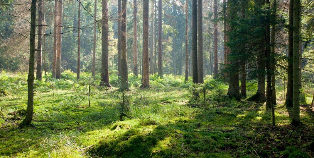 Zrównoważony rozwój – zrównoważone życie